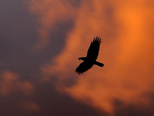 A crow flies off into the sunset, on lat