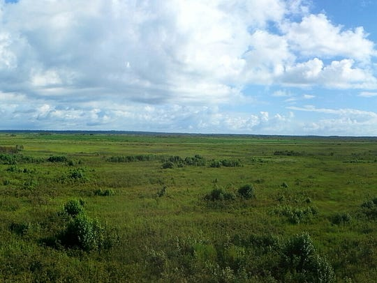 Dark spots in the distance are bison roaming near the
