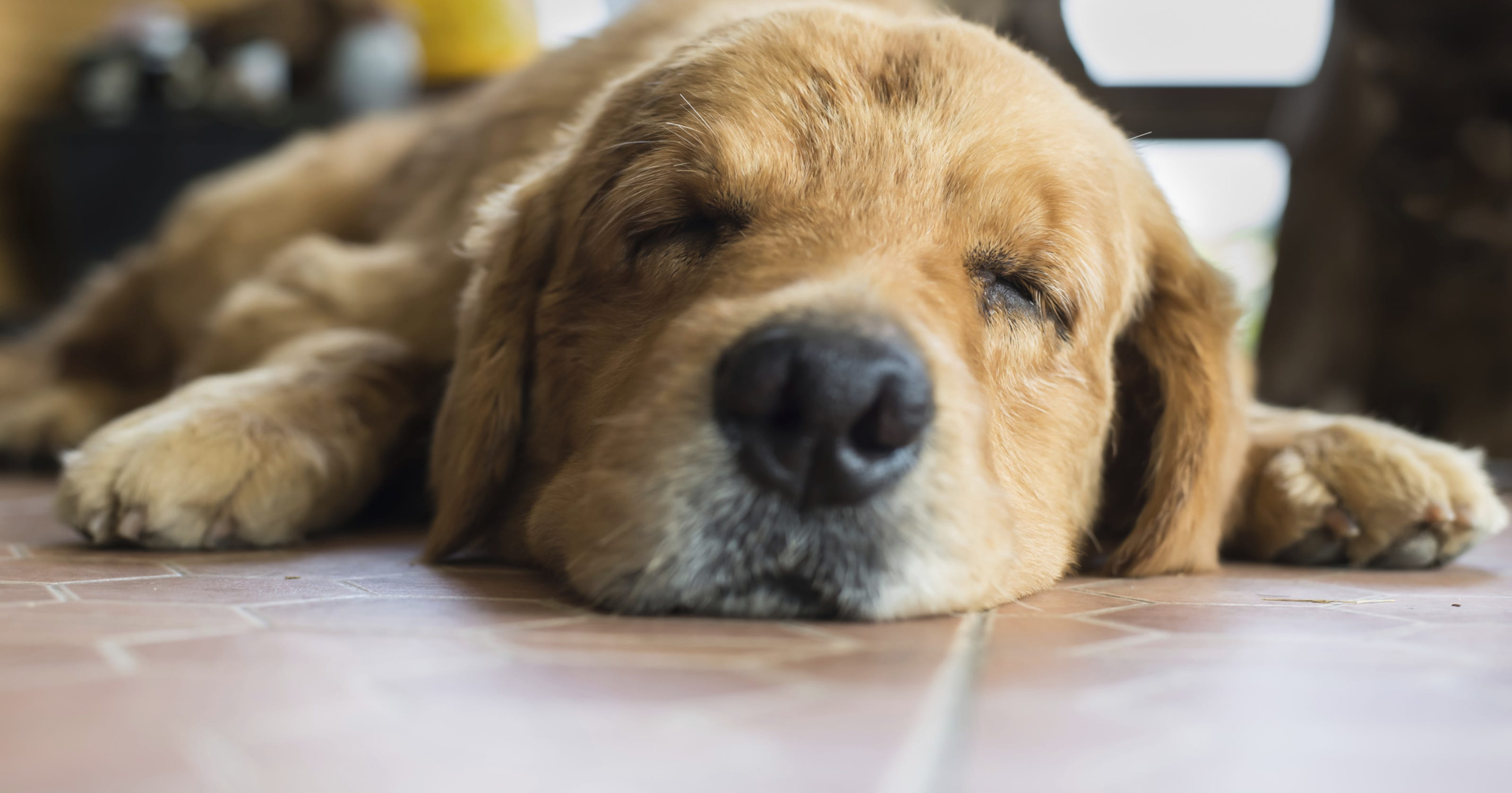 Bloat' refers to 2 different stomach ailments in pets