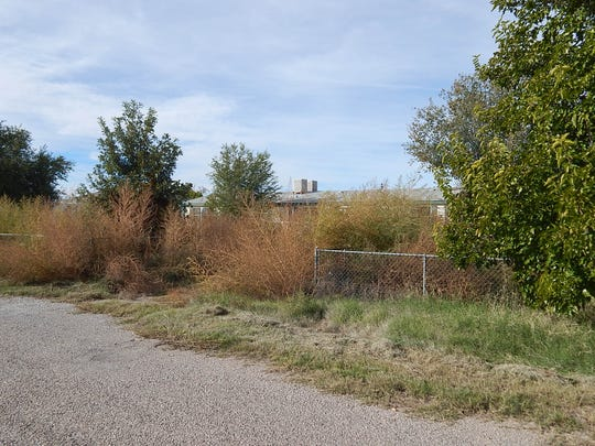 A vacant home that has grown a large amount of weeds in Boles Acres.
