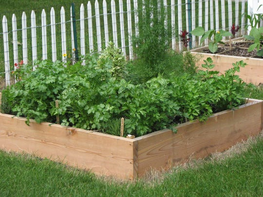 Raised-bed boxes are excellent for growing herbs.