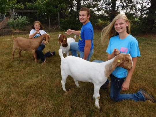 From left, Grace Draeger, brother Jared and sister Regan line up their goats in the family yard.
