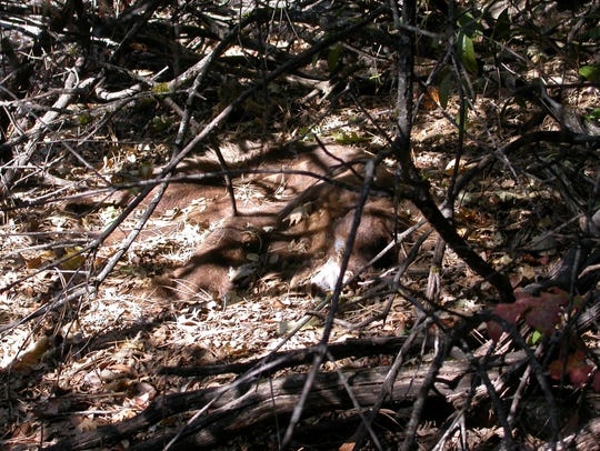 Animal death is common near illegal grow sites at Sequoia