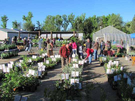 Shasta College Native Plant Sale