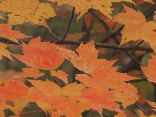635503634571790108-Leaves