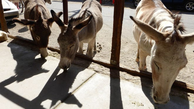 Alfalfa cubes to feed the Oatman burros are for sale in nearly every shop for $1 per bag.