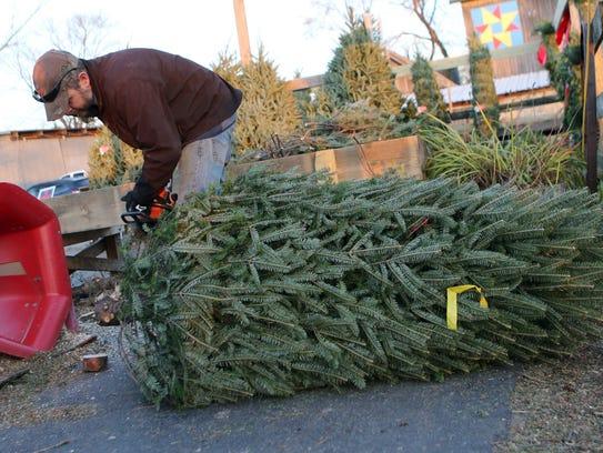 Scott Schuett of Schuett Farms cuts the trunk of a
