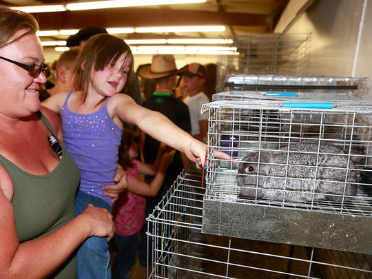 The San Juan County Fair Board has canceled rabbit shows to prevent the spread of rabbit hemorrhagic disease.