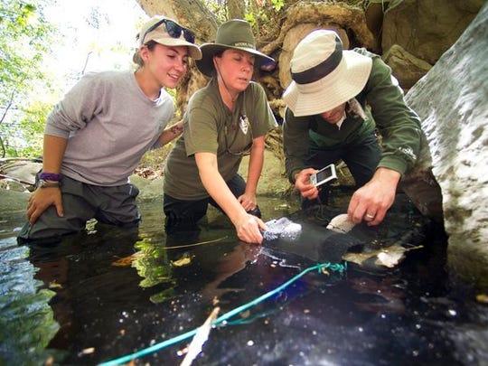 A 2014 photo showing intern Jordyn Mulder, from left, ecologist Katy Delaney and biologist Mark Mendelsohn assessing a red-legged frog eggs.