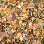Volunteers ask for more yards to rake