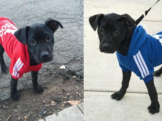 The puppies reportedly stolen from a backyard in Belleville