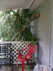 Severe weather Sunday morning caused a tree to fall