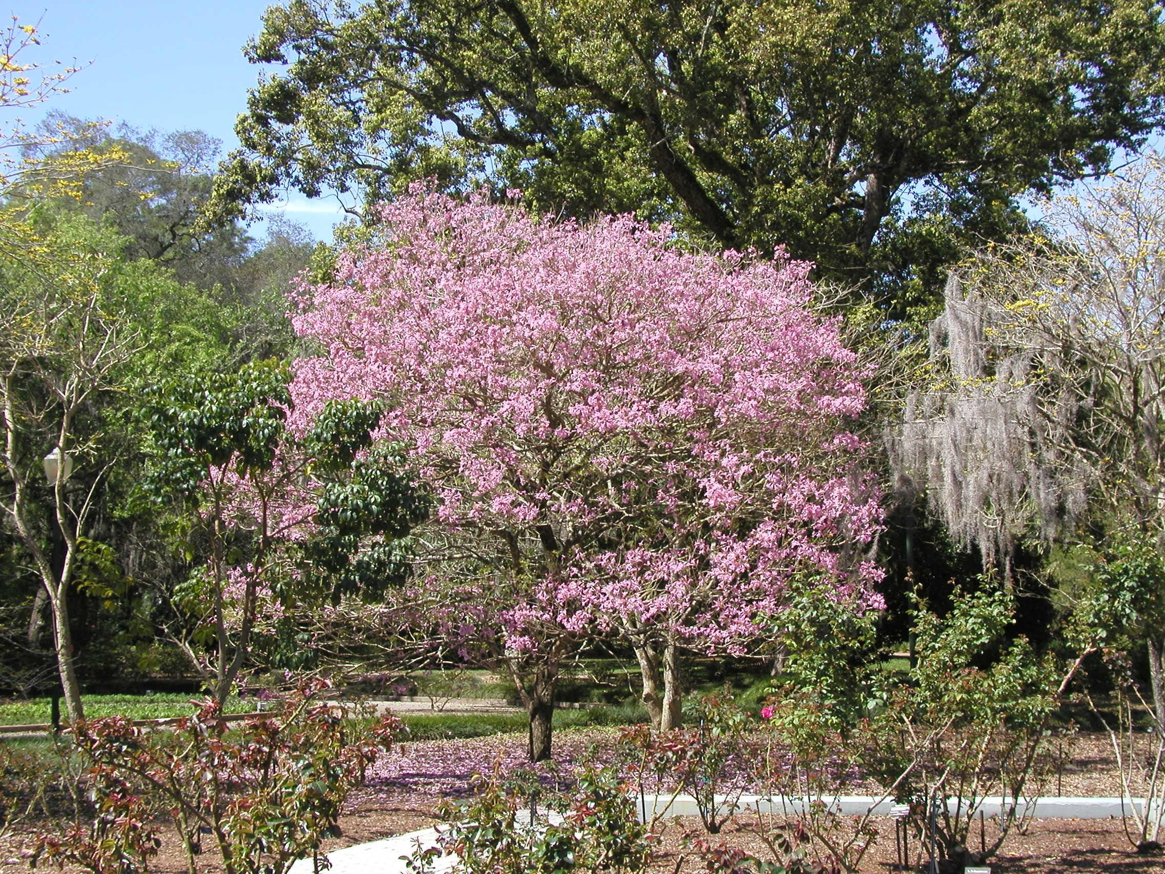 17 flowering trees to plant this spring