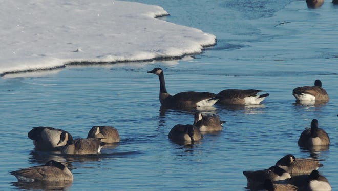 Watch waterfowl and bald eagles patrol the open waters of the Fox River all month long from the shores of the new Fox River Environmental Education Alliance center, Appleton. Special programming will be held each Saturday leading up to Christmas.