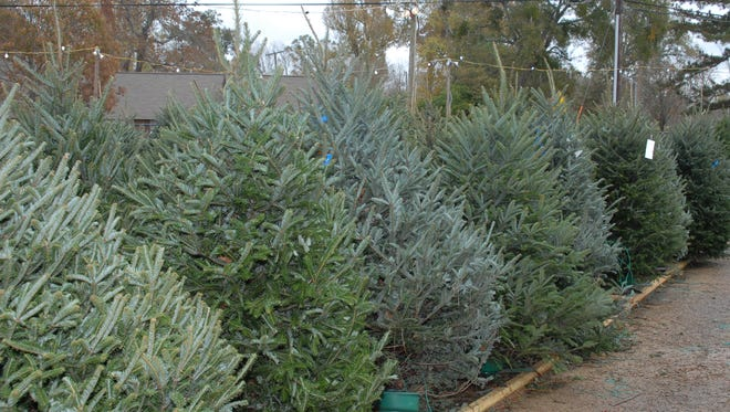 Garden centers offer a variety of cut Christmas trees for sale. LSU AgCenter experts recommend being sure to choose a fresh tree that's right for your location.