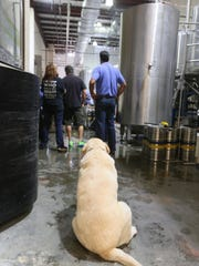 Summer Day, a labrador owned by Matt Day, watches over the tour at Twin Lakes Brewing Co.'s new location in Newport.