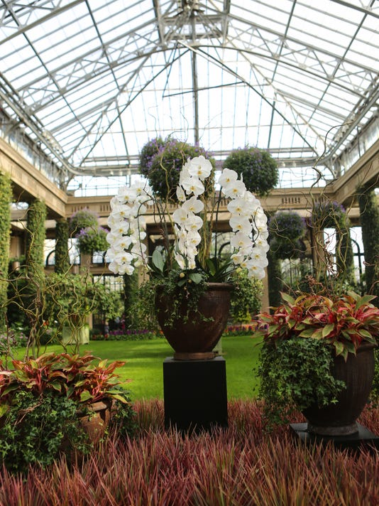 wil xxx longwood orchid show 2015