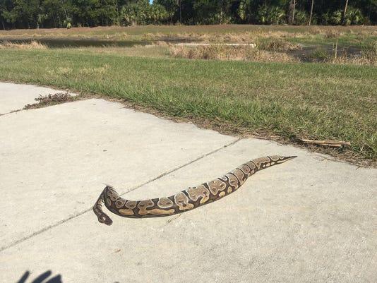 local python