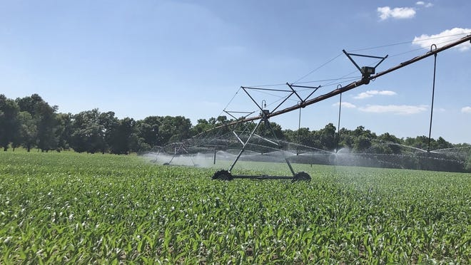 Clemson experts say supplemental irrigation can help improve yields during dry periods.