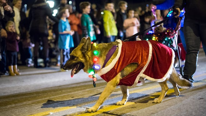 A dog is dressed up for the Santa Parade Friday in St. Clair.