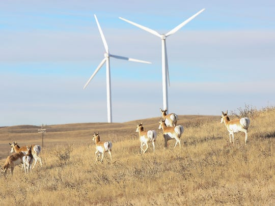 Antelope pass through Duke Energy's Happy Jack wind farm near Cheyenne, Wyoming on Dec. 6, 2016.