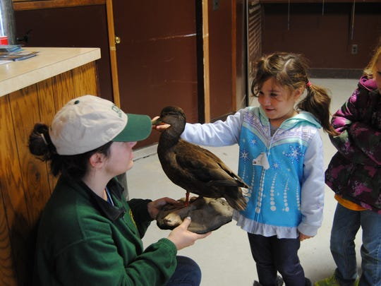 Kindergartener Alma Rios, 5, gently pets the beak of a duck, held by DNR outreach and education assistant Lindsay Hunt, on Tuesday.