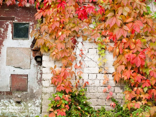 Old doors, white brick wall and autumn leaves