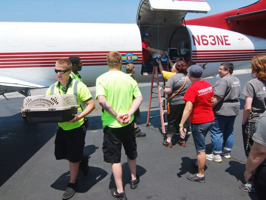 Hundreds of puppies and kittens were flown to Delaware