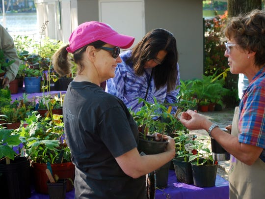 Garden Club of Mountain Lakes  member Cath Mitchell works at the club's annual plant sale.