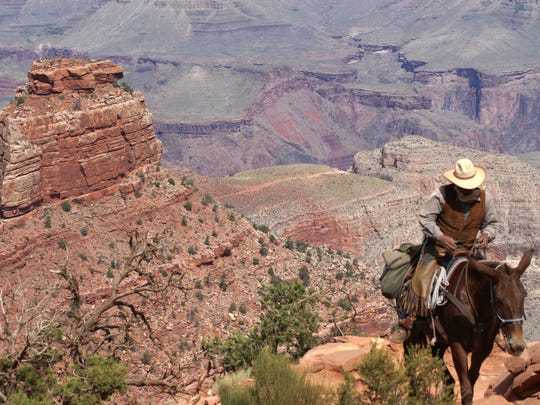 A string of mules bring carry supplies in and out of Grand Canyon along the South Kaibab Trail.