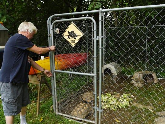 The enclosure in Scott McGillicuddy's yard where he keeps his tortoises.