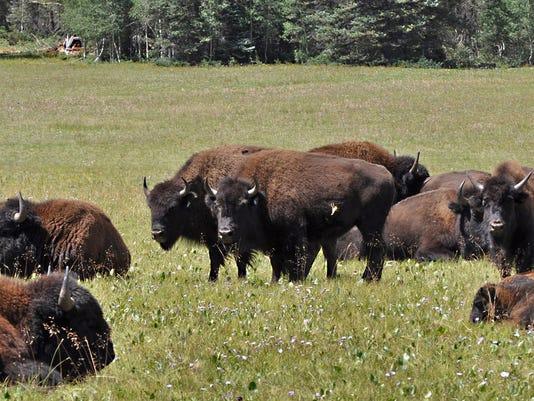 bison canyon