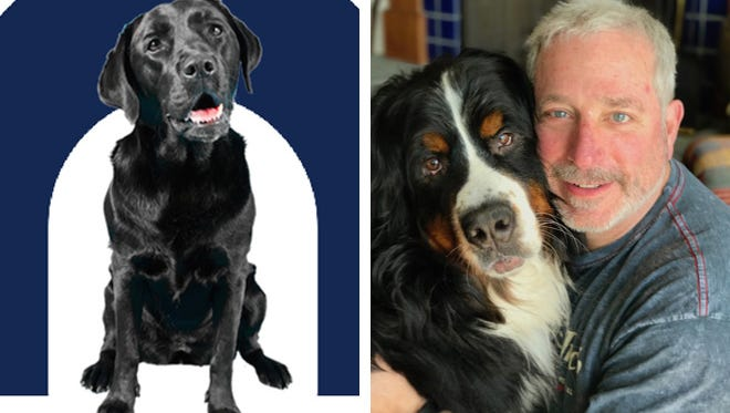 Artie (left), the labrador bird dog of gubernatorial candidate Dana Wachs,  and Auggie, candidate Andy Gronik's dog.
