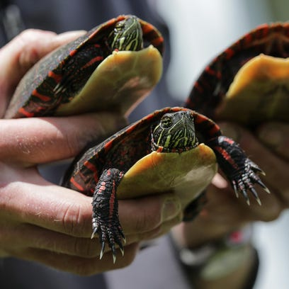 051316_turtle_research_rg_2