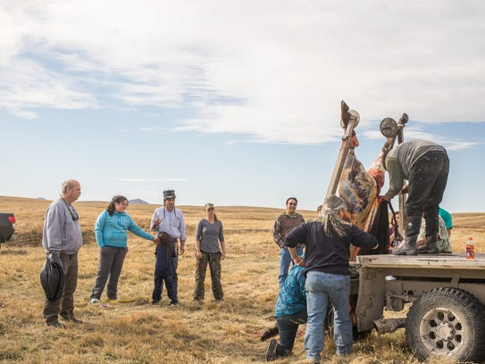 Roughly 10 students participated in a bison hunt a