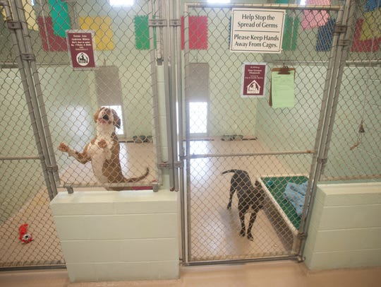 Dogs for adoption are shown at the Cumberland County