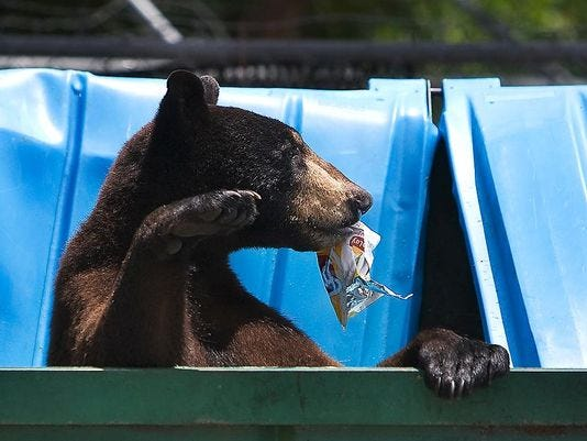 Nearly 1 200 bear hunting permits sold in 2 days for Florida 3 day fishing license