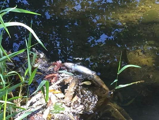 Cooking Oil In Creek Kills Up To 100 000 Fish