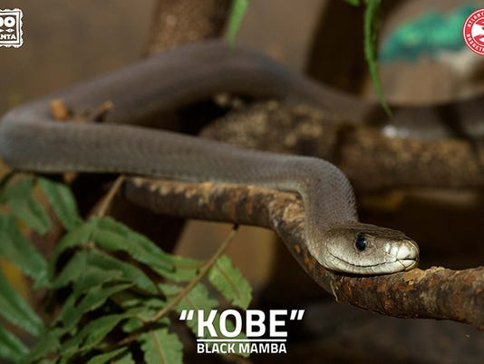 the deadliest snake in the world is coming to the indianapolis zoo