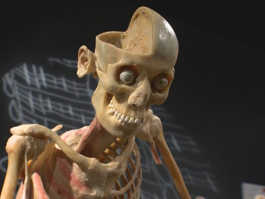 Museum gives a rare look inside the human body