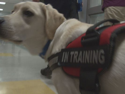 how to train a service dog at home