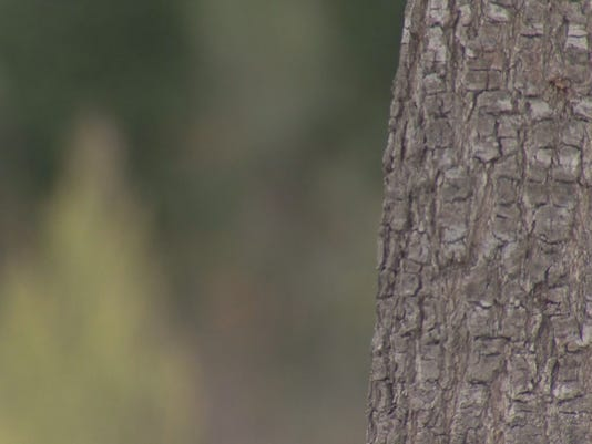 Mountain Cedar Allergy Sufferers Find Relief With