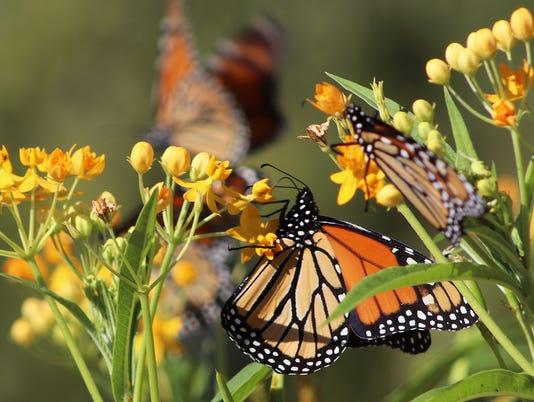 636683004132182533-Pollinator-Count-1.jpg