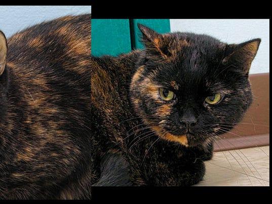 HAWS-pet-of-the-week-0202-Zoey-and-Bella.jpg