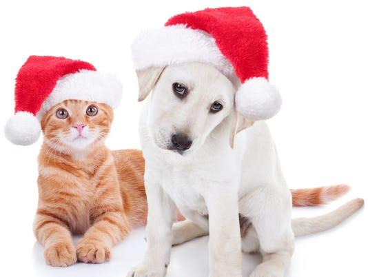 635839701835228662-santa-paws.jpg