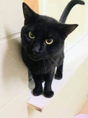 I'm a cutie pie -- and I want to be your Boo!