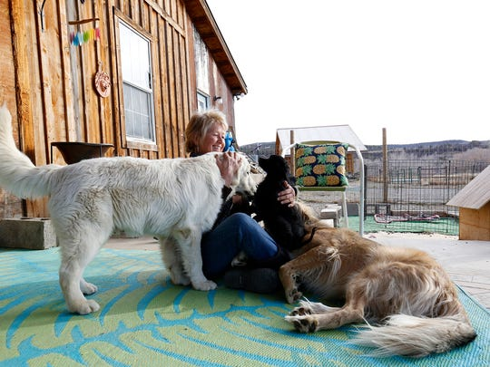 In this Nov. 29, 2017 photo, Debbie Faulkner shares a moment with her dogs she has rescued at her ranch in Crawford, Colo. Faulkner is the owner of the Black Canyon Animal Sanctuary and founder of the Silver Whiskers program which pairs senior pets with senior citizens.