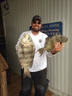 Mike Behney caught this  6.5-pound sheepshead and 4.69-pound trigger fish at the Outer Wall.