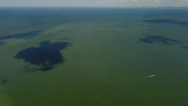 An aerial view of Lake Erie in July from Bolles Harbor shows blue-green algae in the area. Scientists predicted the algal bloom to reach a 4.5 on the severity index this year.