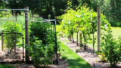 Seven homes are featured during the 20th annual Sheboygan Area Garden Walk, which takes place from  9 a.m. to 4 p.m., July 9, in the. the greater Plymouth area.